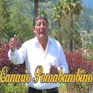 Canario Pomabambino